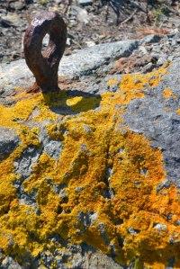 Lichen and iron fitting