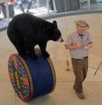 Bear act.