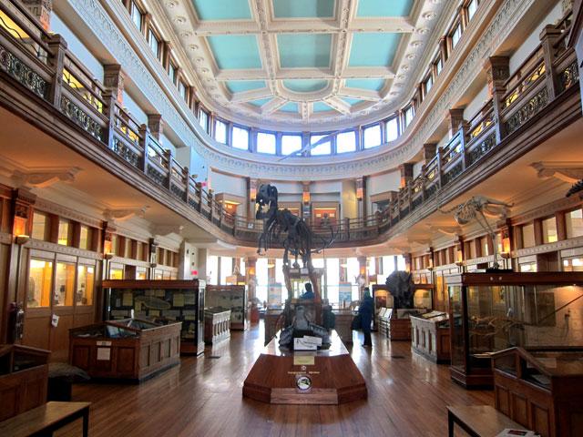 The main floor of the Redpath Museum and upper floor balcony.