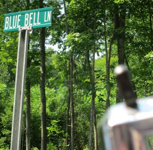BLUE BELLE applied her brakes to get this shot (even though spelled wrong)