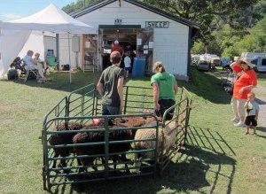 Sheep area.