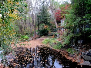 Looking across the mill pond (water level low) the the house on the right.